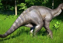 Photo of Iguanodon – one of the first dinosaurs discovered