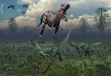 Photo of The oldest known dinosaurs – Lesothosaurus