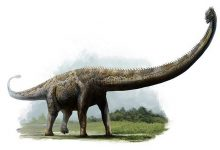 Photo of Dinosaurs with the longest necks – Mamenchisaurus