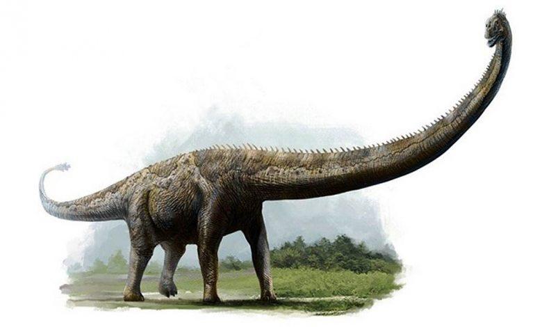 Photo of Dinosaurs with the longest necks – Mamenchisaurus
