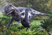 Photo of Megalosaurus – the first dinosaur discovered