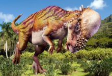 Photo of The heaviest Pachycephalosaurs (Pachycephalosauria) Top 10