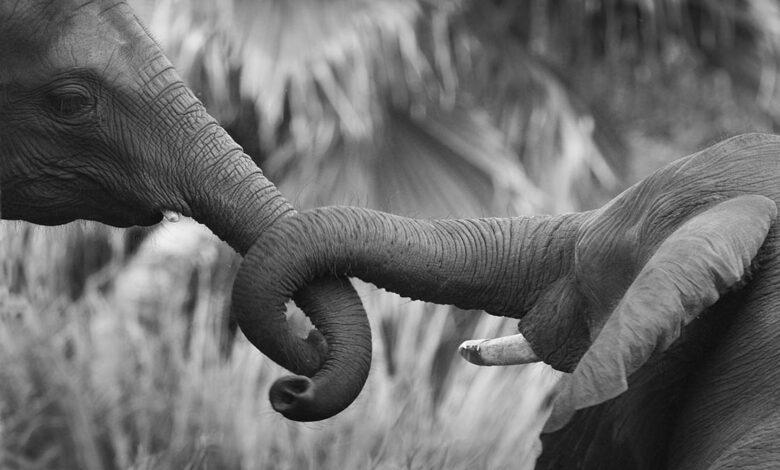Photo of Sexual behavior of animals