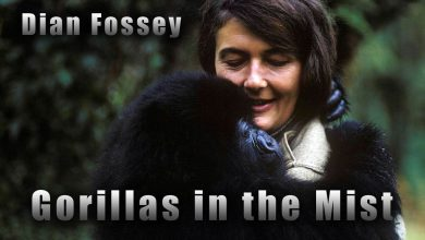 Photo of Gorillas in the Mist – the story of Dian Fossey
