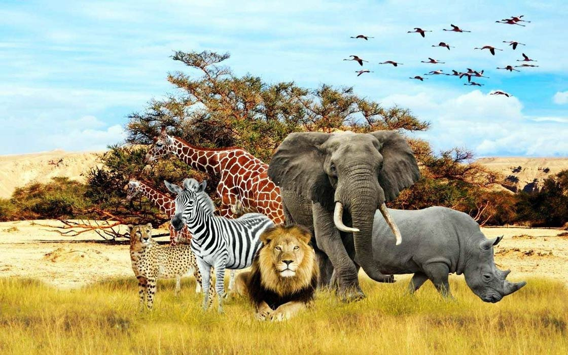 Photo of Fascinating places to observe wild animals