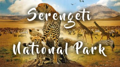 Photo of Serengeti National Park