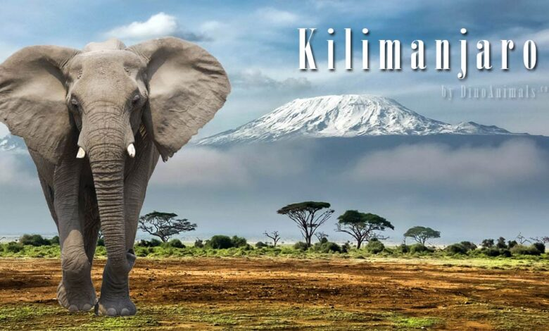 Photo of Kilimanjaro National Park