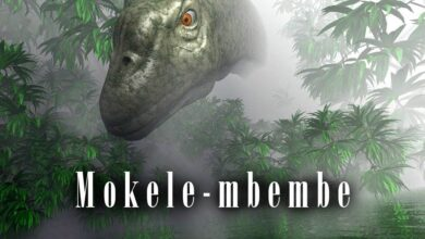 Photo of Mokele-mbembe – a dinosaur in Africa?