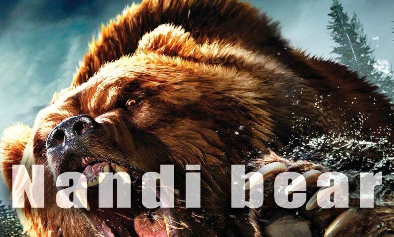 Photo of Nandi bear