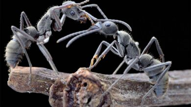 Photo of Ants – unusual insects
