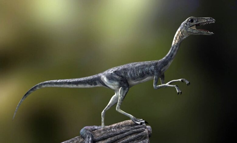 Photo of Compsognathus – one of the smallest dinosaurs