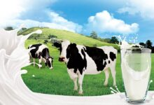 Photo of Milk – where does it come from?