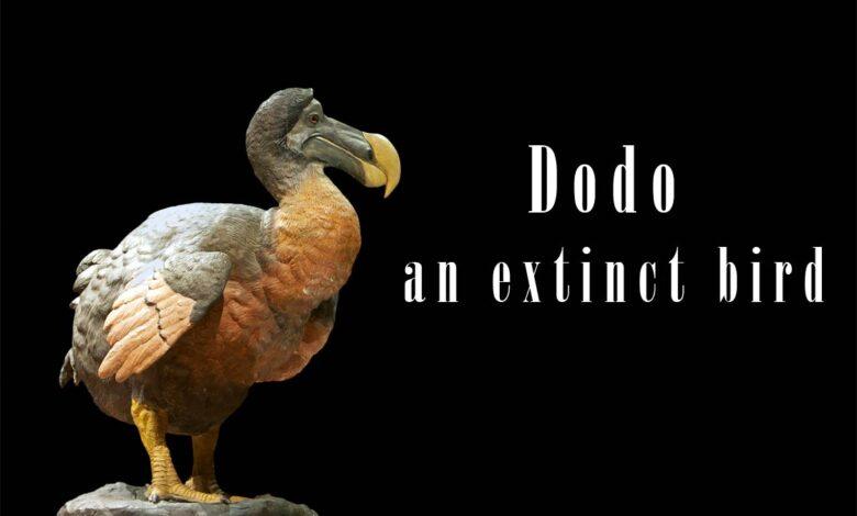 Photo of Dodo (Raphus cucullatus)