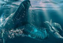 Photo of Kronosaurus – one of the largest pliosaurs