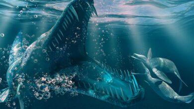 Photo of Kronosaurus – one of the largest pliosaurs