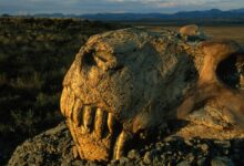 "Photo of Mass extinctions of species – the ""Big Five"""