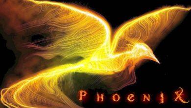 Photo of Phoenix and Roc – mythological birds