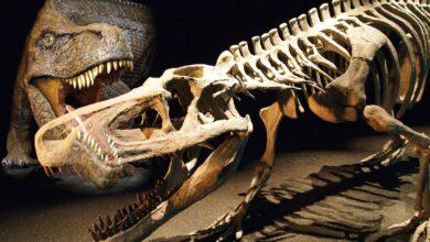 "Photo of Saurosuchus – a ""lizard crocodile"""