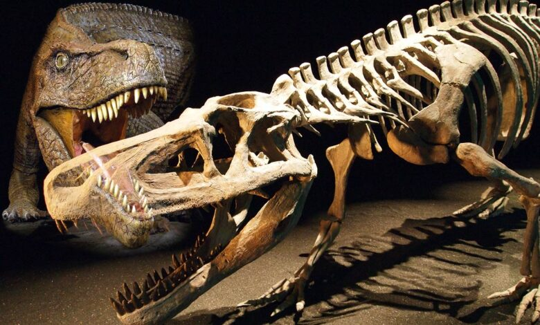 "Photo of Saurosuchus – a ""lizard crocodile"""