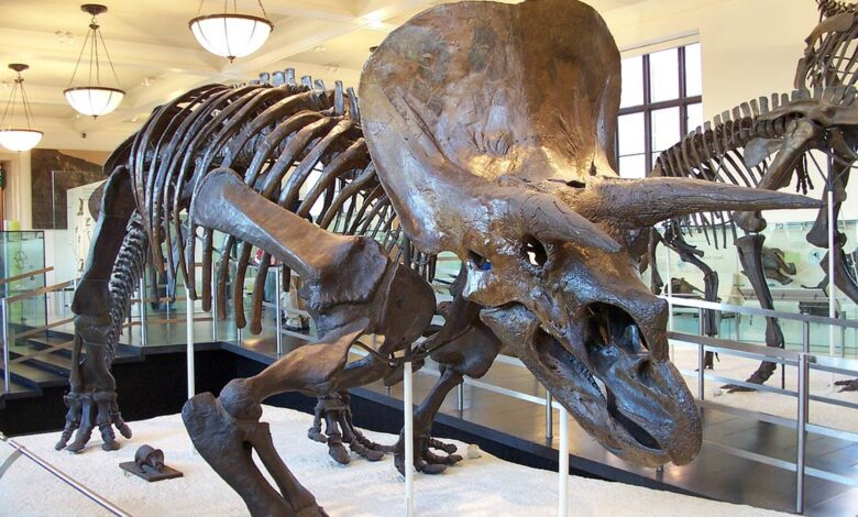 Photo of Triceratops – one of the best-known dinosaurs