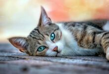 Photo of 10 myths about cats