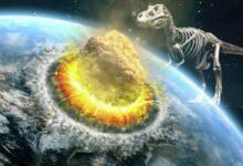 Photo of We know how dinosaurs became extinct. A new discovery