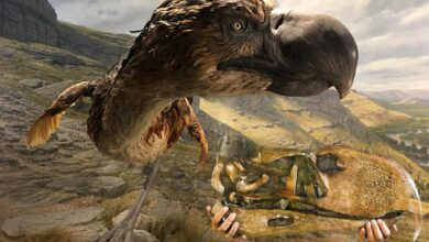 Photo of The largest and heaviest birds ever existed