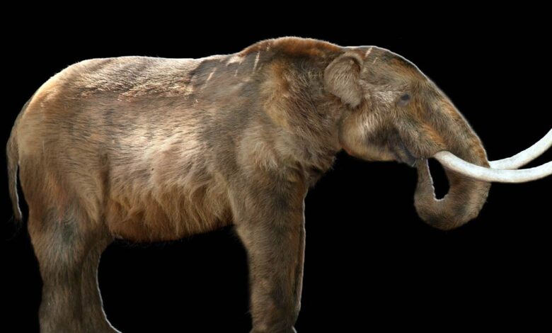 Photo of Mastodon (Mammut americanum)