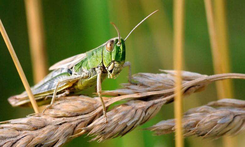 Photo of Locust anti-collision system